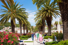 Split's palm promenade Stock Image