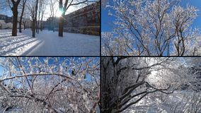 Split screen of snow covered trees in a winter city park. Split screen of snow covered trees in a winter city park stock footage