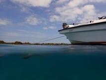 Split-shot of an American crocodile in Cuba Royalty Free Stock Images