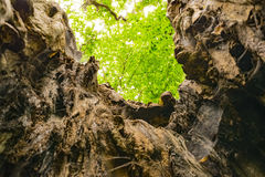 Split Tree. A shot from the interior of a tree in a forest in north london Royalty Free Stock Photos