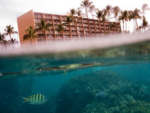 Split under over water photo of tropical fish in front of hotel. Split under and over water photo of tropical fish and corals  in front of hotel. Deep blue water Stock Images