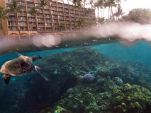 Split under over water photo of turtle swimming in front of hotel Stock Photography