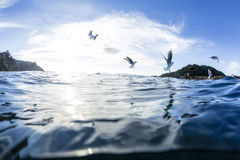 Split View With Gull Royalty Free Stock Images