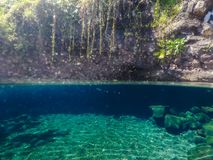 Split view of Piula Cave Pool swimming hole with a fish swimming. In beautiful clear water - at Upolu Island, Western Samoa, South Pacific royalty free stock photo