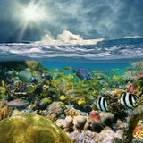 Split view with wave crashing and coral reef fish. Over-under split view with wave crashing onto a reef, and beautiful coral with school of fish Royalty Free Stock Image