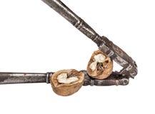 Split a walnut in nutcracker Royalty Free Stock Image