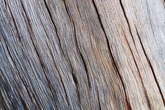 Split wood. A piece of weathered timber Royalty Free Stock Image