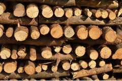 Splitted firewood texture Stock Images