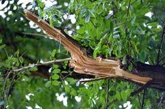 Splitted-Holz Lizenzfreies Stockfoto