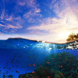 Splitted underwater sunset wet template. Design template. underwater part with coral reef and tropical sunset skylight splitted by waterline royalty free stock photography