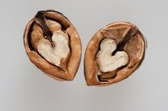 Splitted walnut Stock Photos