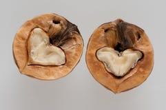 Splitted walnut Stock Image