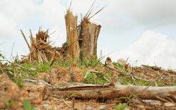 Splitterbaumstümpfe nach Abholzung lizenzfreies stockfoto