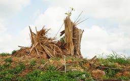 Splitterbaumstümpfe nach Abholzung lizenzfreie stockfotografie