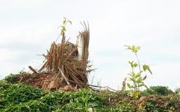 Splitterbaumstümpfe nach Abholzung stockfoto