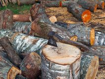 Splitting logs 3 Royalty Free Stock Photos
