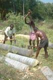 Splitting palmyra logs Stock Photography