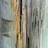 splittrat trä Arkivfoton