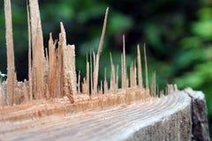 splittrat trä Arkivfoto
