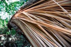 Splittrat träd 4 fotografering för bildbyråer