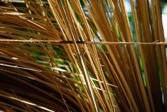 Splittrat träd 10 fotografering för bildbyråer