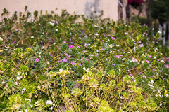 Społeczność miejska Piękny kwiat Fotografia Stock