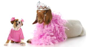 Spoiled animals Royalty Free Stock Photography