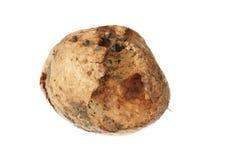 Spoiled  bad potato Stock Photo