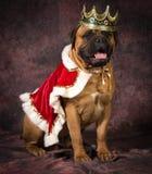 Spoiled dog Royalty Free Stock Photo