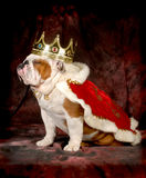 Spoiled dog Royalty Free Stock Images
