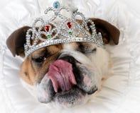 Spoiled female dog Stock Photos