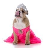 Spoiled female dog Royalty Free Stock Photo