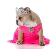 Spoiled female dog Royalty Free Stock Photos