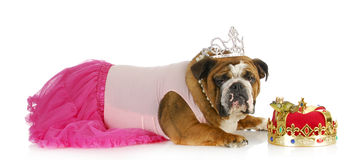 Spoiled princess royalty free stock images