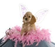 Spoiled puppy Stock Images