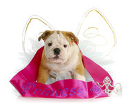 Spoiled puppy Royalty Free Stock Photography