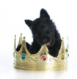 Spoiled puppy Royalty Free Stock Photos