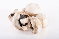 Spoiled rotten field mushrooms Royalty Free Stock Photography