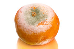 Spoiled tangerine on white Stock Photos