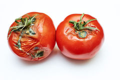 Spoiled tomato royalty free stock photography
