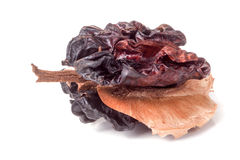 Spoiled walnut isolated on a white background closeup Royalty Free Stock Image
