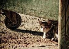 Spojrzenie kot fotografia stock