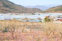 spok?j i pokojowy krajobraz, wiosna krajobraz fotografia stock