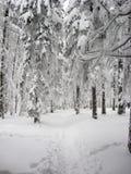 Spokój i zaciszność w zima lesie zdjęcie stock