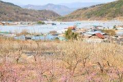spok?j i pokojowy krajobraz, wiosna krajobraz zdjęcia royalty free