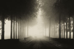 Spoken in de mist Stock Foto