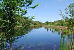 Spokojna droga wodna w natury prezerwie w Sarasota Floryda Zdjęcia Royalty Free