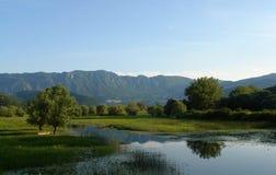 Spokojna jeziorna zatoczka na tle góry, błękitny bezchmurny niebo i zieleni drzewa, zdjęcia royalty free