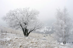 spokojna krajobrazowa halna zima Fotografia Stock