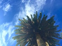 Spokojna palma Obrazy Stock